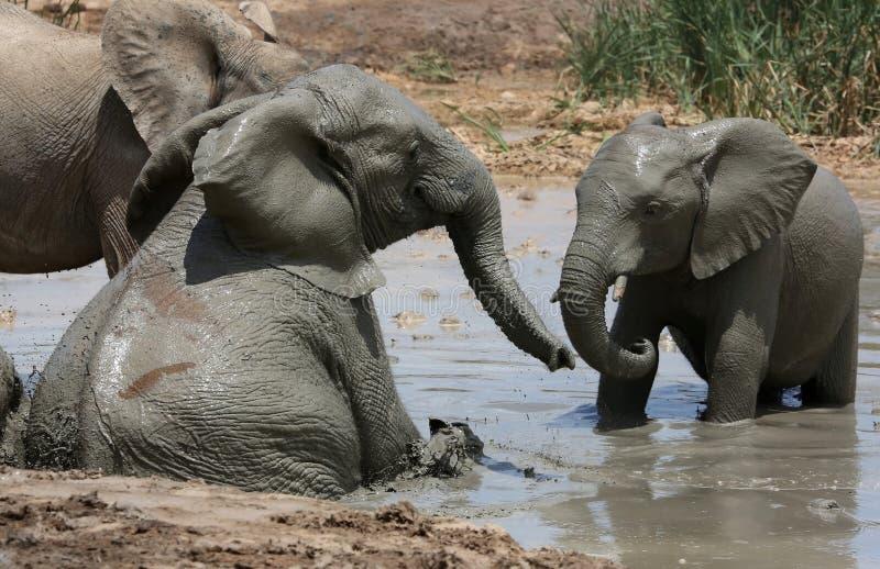 Baño de fango del elefante imagen de archivo