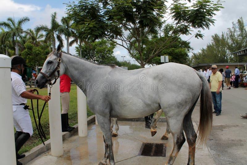 Baño de los caballos foto de archivo libre de regalías