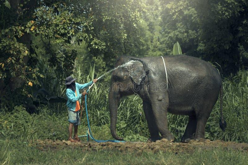 Baño del elefante al aire libre imagen de archivo