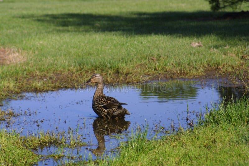 Baño del pájaro creado por la lluvia/el insecto de la litera imagenes de archivo