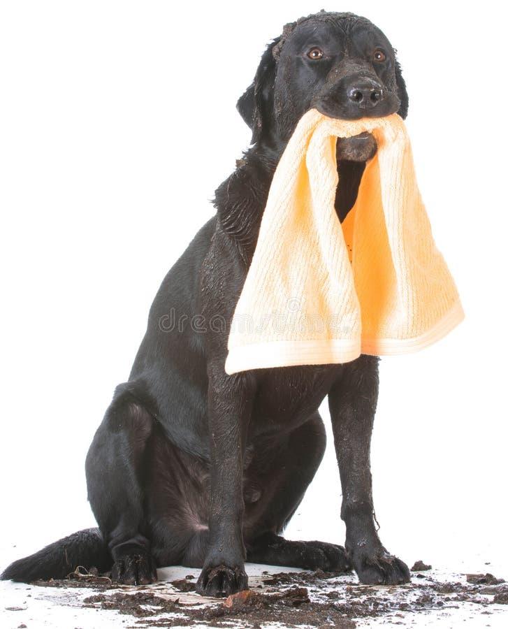 Baño que espera del perro para fotos de archivo