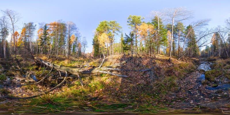 Bańczaści panoramy 360 rzecznego strumienia w lesie i spadać drzewie stopnie 180 vr zawartość obraz stock