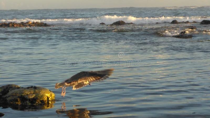 bańka kopii ryby morskie życie ilustracyjnego wodorosty są rozmieszczone tekstu wektora fotografia royalty free