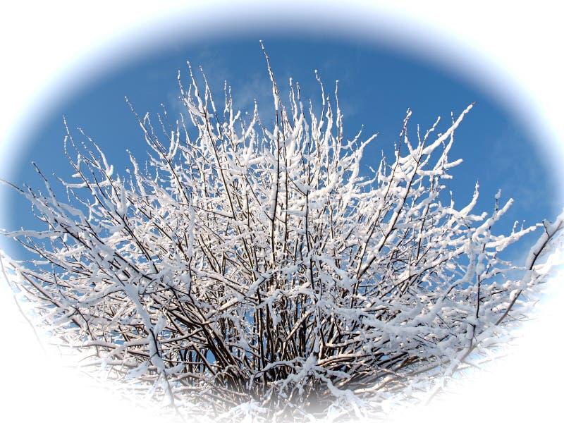 Baśniowe śnieżne gałąź wapna drzewo przeciw niebieskiemu niebu w białym okręgu zdjęcia royalty free