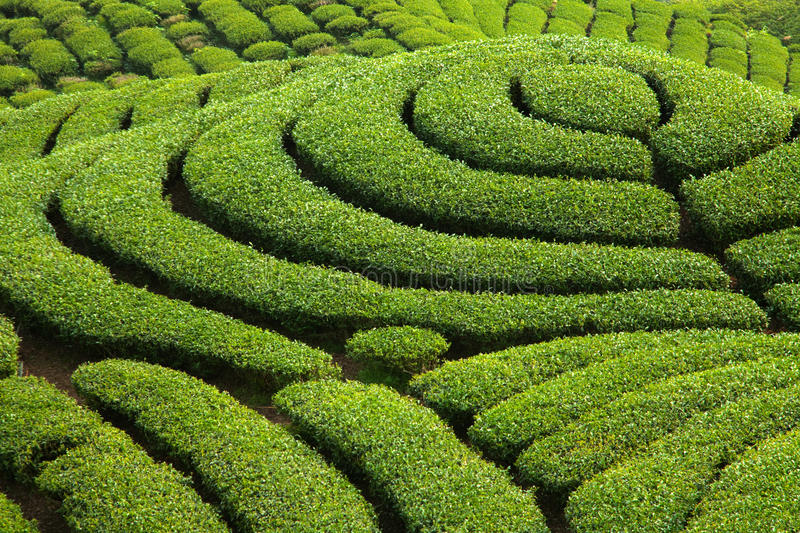 Download Ba Gua Tea Garden In Taiwan Royalty Free Stock Images - Image: 14095349