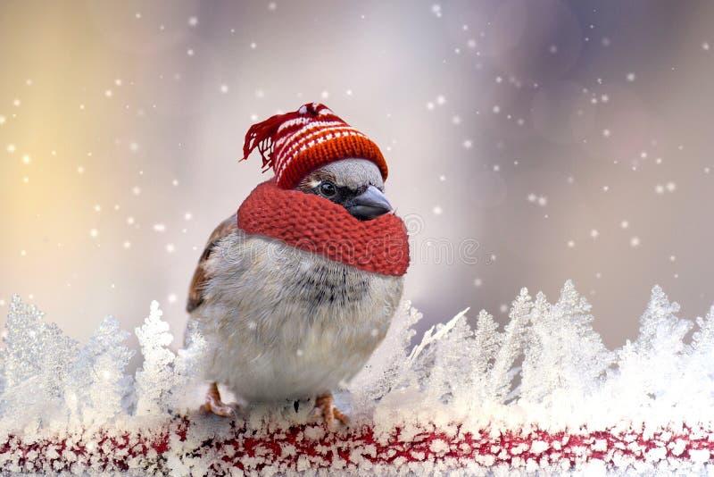 Bałwan, belfer, ptak, śnieg