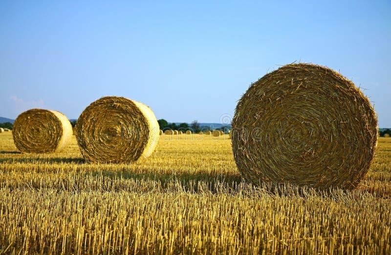 Baal van hooi op landbouwgebied stock foto's