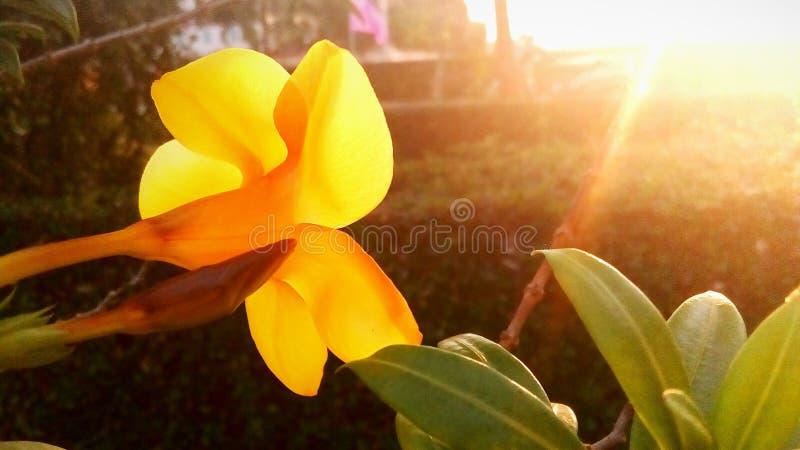 Baanburi fotos de archivo