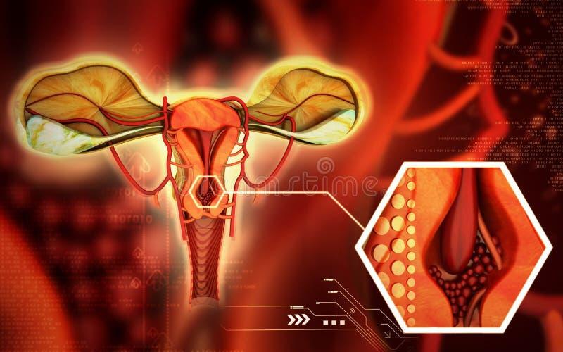 baarmoeder royalty-vrije illustratie