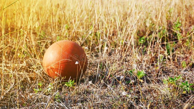 Baarzen op het grasgebied royalty-vrije stock afbeelding
