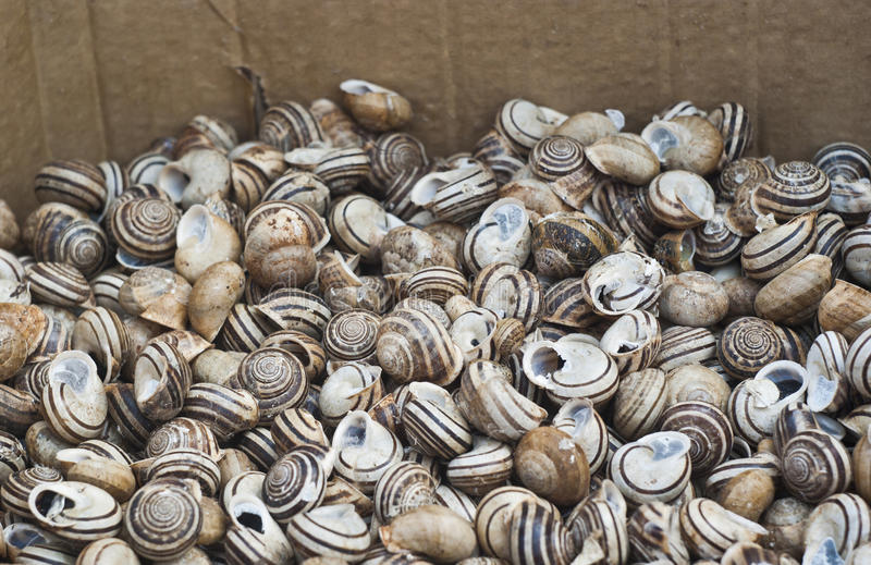 Download Babbaluci.Lots Of Pile Snails Stock Photo - Image: 28100832