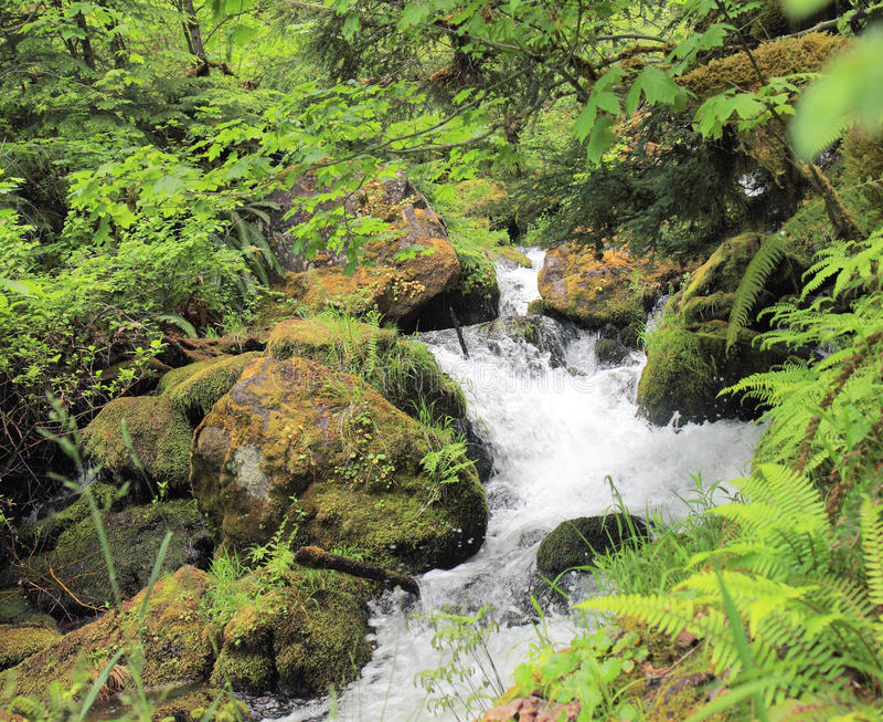 Babbling Brook. Creek running through forest between mossy rocks and green ferns stock photo