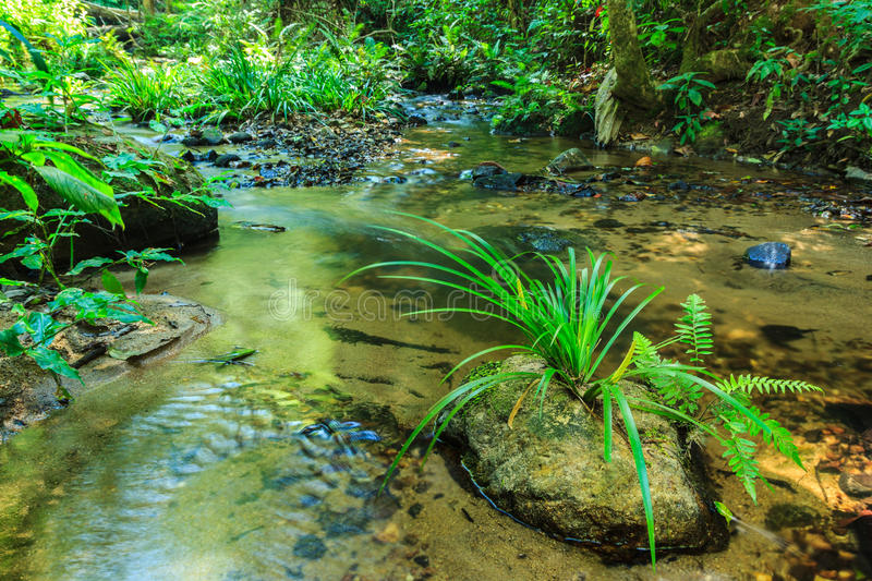 Babbling Brook in Green Forest. At northern Thailand royalty free stock photos