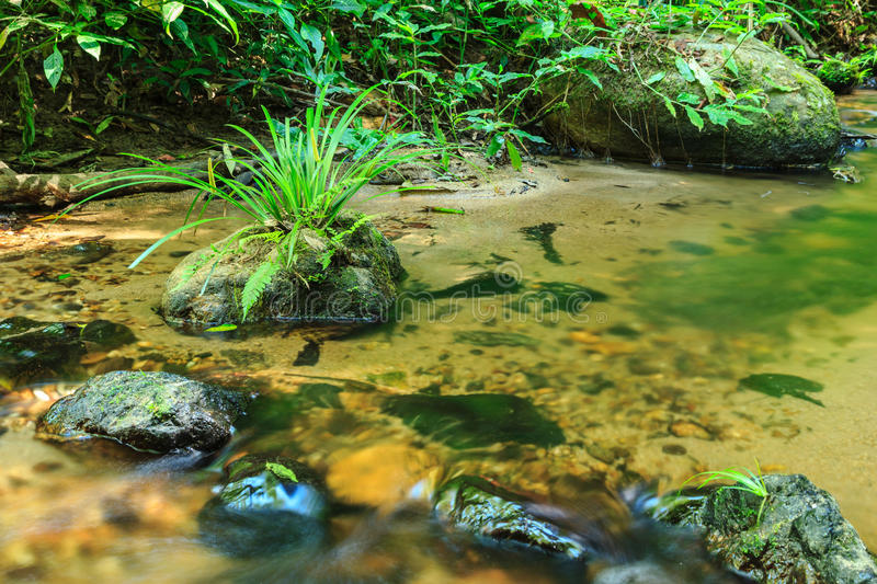 Babbling Brook in Green Forest. At northern Thailand, Asia stock photos