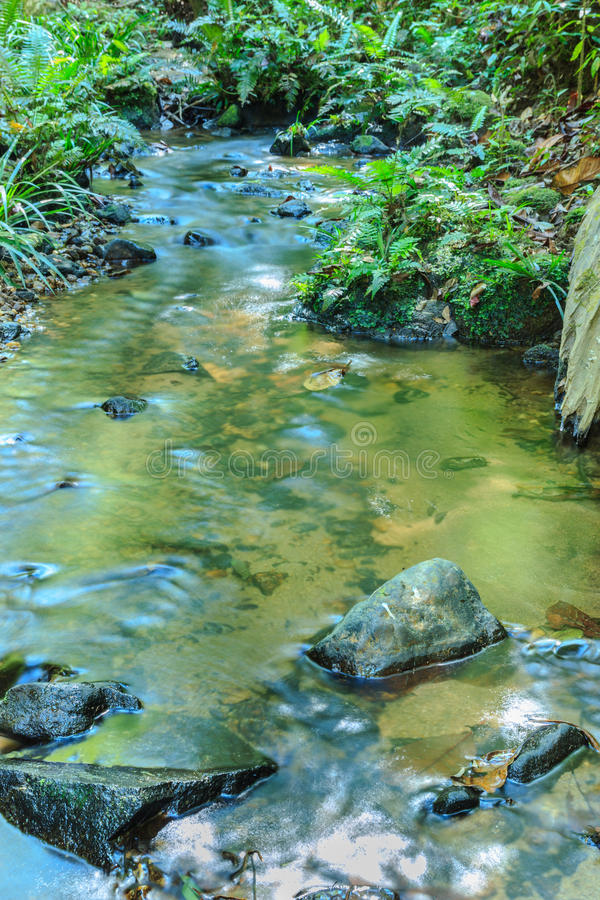 Babbling Brook in Green Forest. At northern Thailand, Asia stock photo