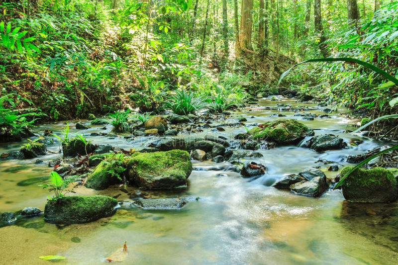 Babbling Brook in Green Forest. At northern Thailand, Asia royalty free stock photo