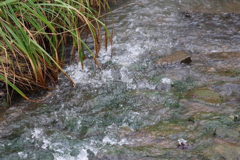 Babbling Brook. A quiet serene place, with the quiet sounds of water flowing over rocks with plant growing their leafs dipping into the water stock image