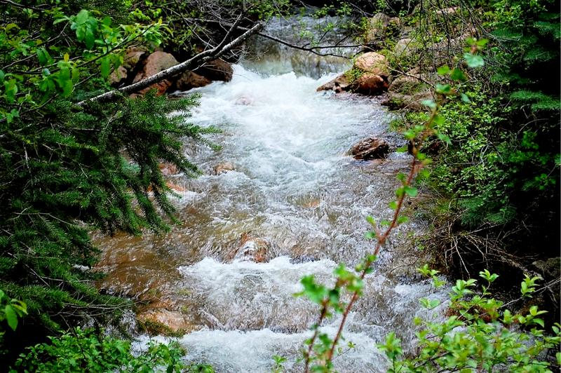 Babbling Mountain Stream During Summer. Babbling Mountain Stream During the Height of Summer in Colorado royalty free stock image