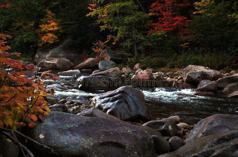 Rocky stream surrounded by autumn trees. A babbling stream flows over rocks, surrounded by an amber forest in fall stock images
