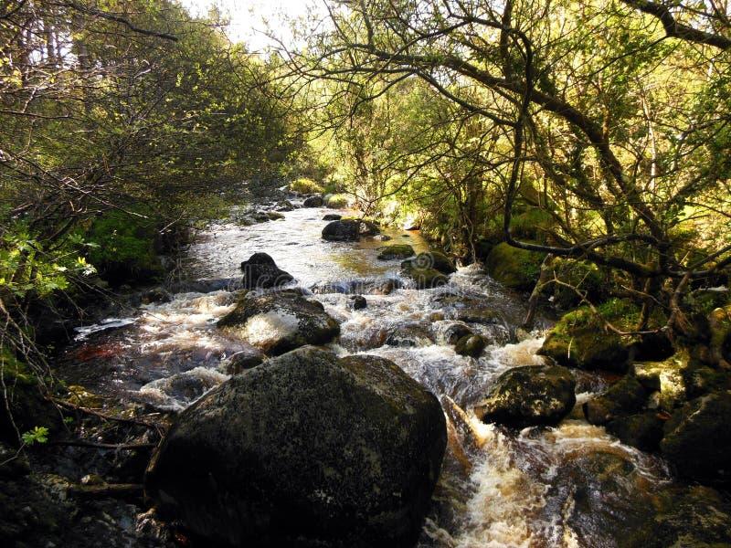 Rushing Stream, Ireland. A babbling stream in Spring rushes through a green glen near Glendalough, Ireland stock photos
