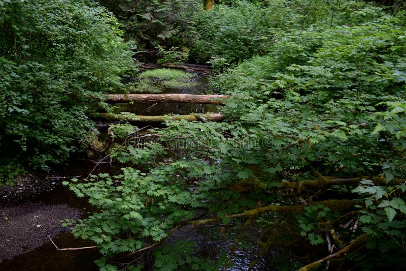 Babbling Stream. A stream with babbling water moving under the fallen trees stock photography