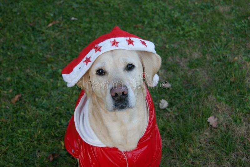 Babbo Natale image stock