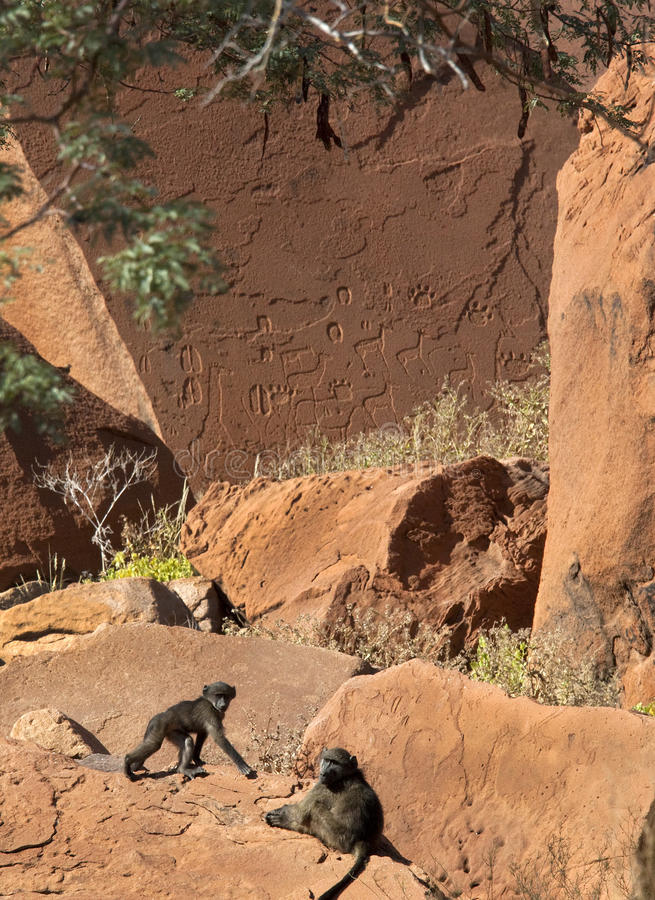 Babbuini e petroglifi antichi - Namibia fotografia stock