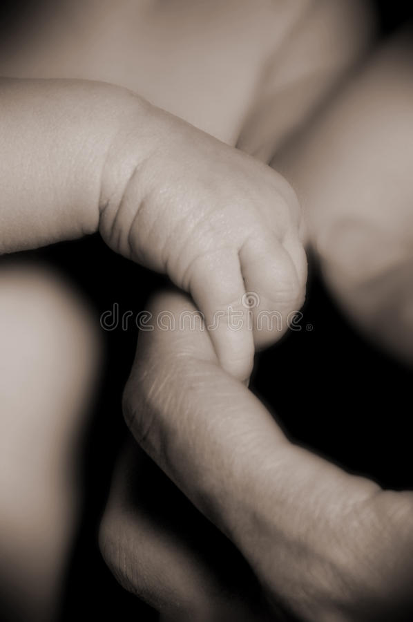 A Babies Hand royalty free stock photo
