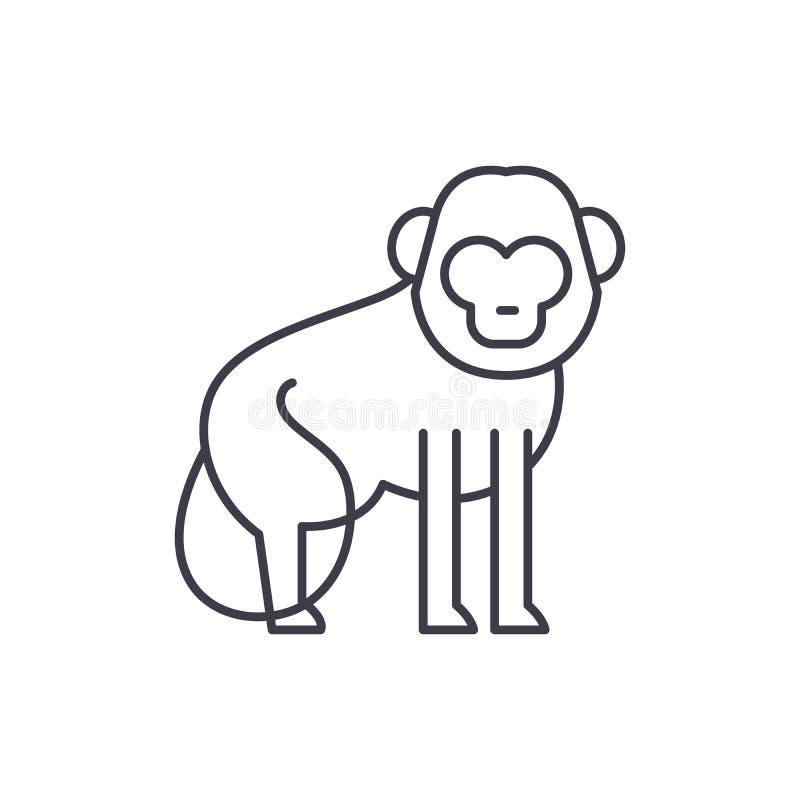Baboon έννοια εικονιδίων γραμμών Baboon διανυσματική γραμμική απεικόνιση, σύμβολο, σημάδι ελεύθερη απεικόνιση δικαιώματος