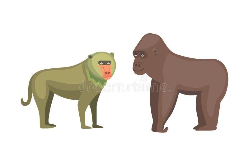 Baboon απεικόνιση κινούμενων σχεδίων πιθήκων και γορίλλων άγρια φύση της Αφρικής απεικόνιση αποθεμάτων