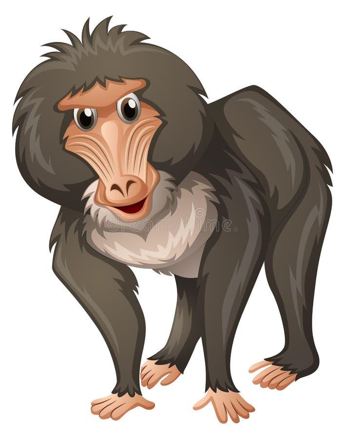 Baboon με την γκρίζα γούνα διανυσματική απεικόνιση