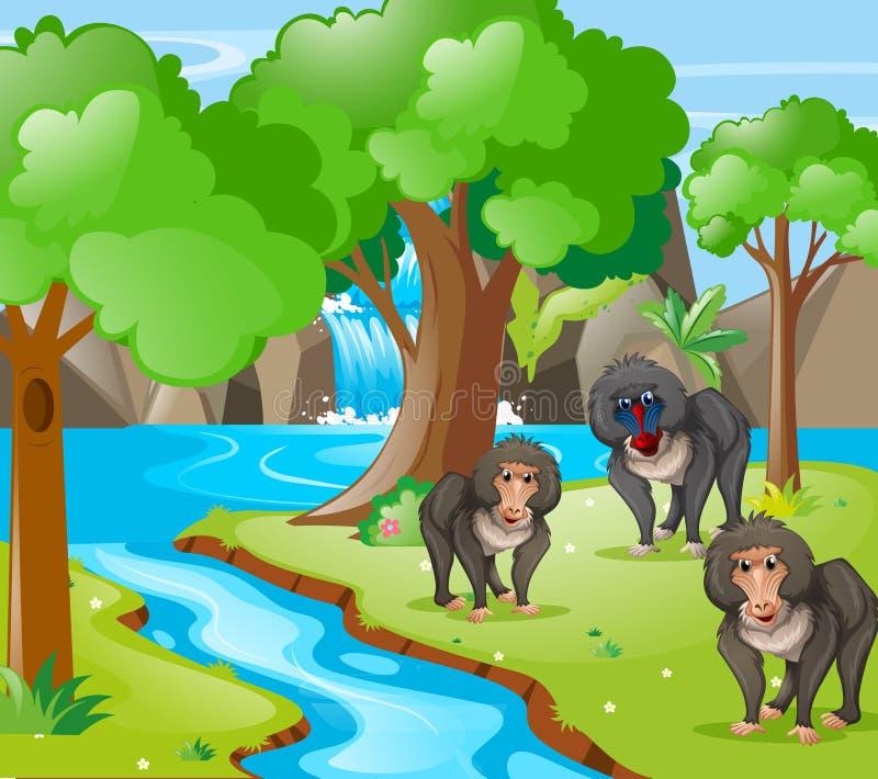 Baboon πίθηκοι στα ξύλα διανυσματική απεικόνιση