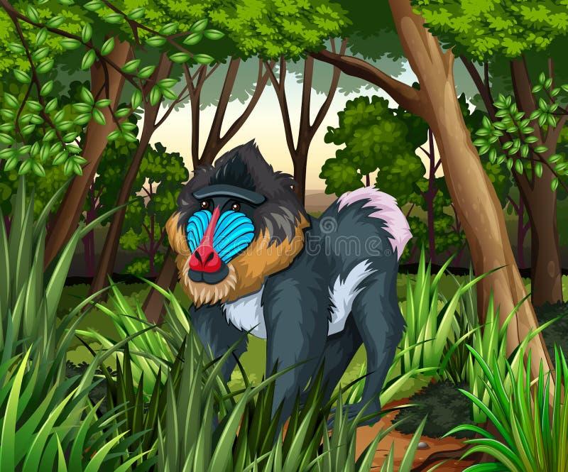 Baboon που ζει στο σκοτεινό δάσος απεικόνιση αποθεμάτων