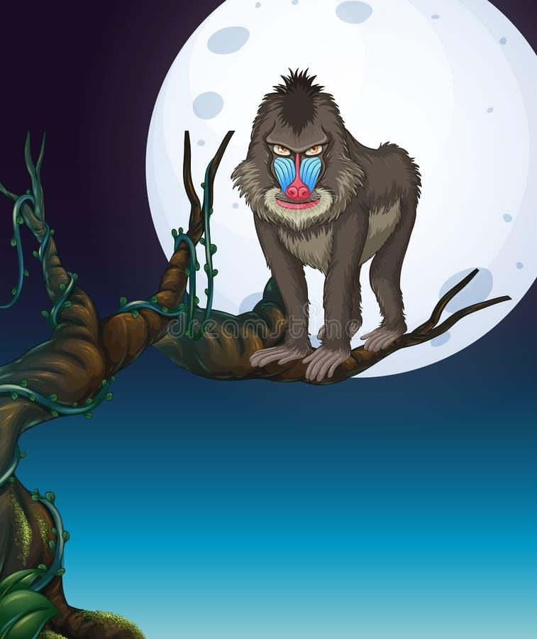 Baboon στη σκηνή νύχτας δέντρων ελεύθερη απεικόνιση δικαιώματος