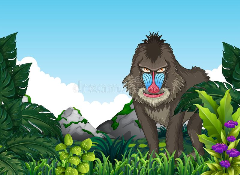 Baboon Mandrill στο δάσος ελεύθερη απεικόνιση δικαιώματος