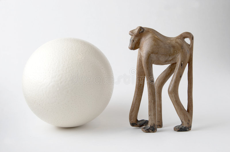 Baboon and ostrich egg