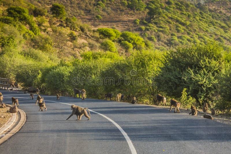 Babuínos na estrada em Tanzânia imagens de stock royalty free