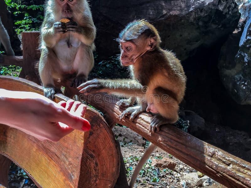 Baby-Affe, der handgefüttert ist stockfoto