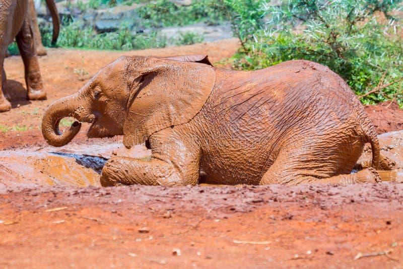 Baby Afrikaanse Olifant in Modderbad die Pret hebben royalty-vrije stock foto
