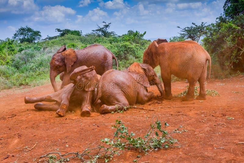 Baby Afrikaanse Olifanten die in het Stof spelen royalty-vrije stock afbeelding