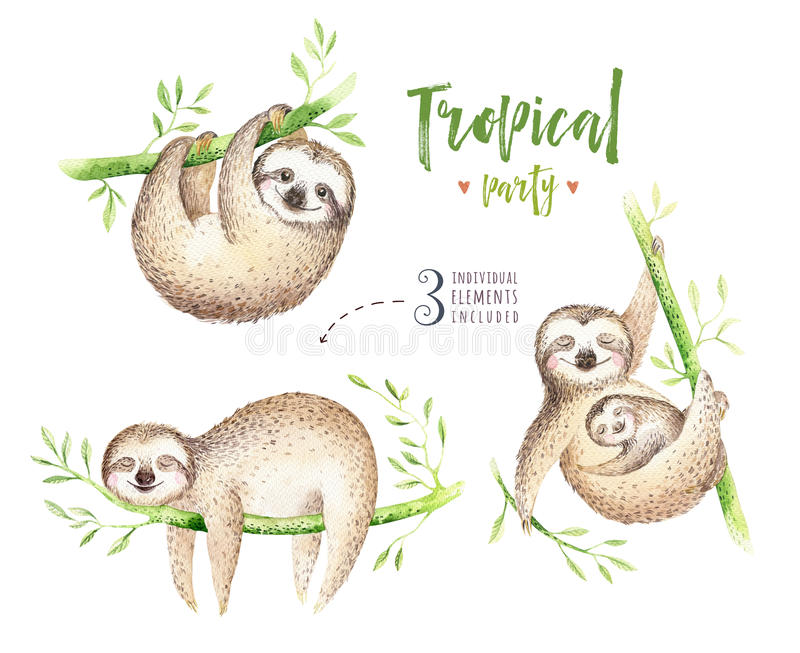 Baby animals sloth nursery isolated painting. Watercolor boho tropical drawing, child tropical illustration. cute palm. Tree leaves, tropic green texture vector illustration