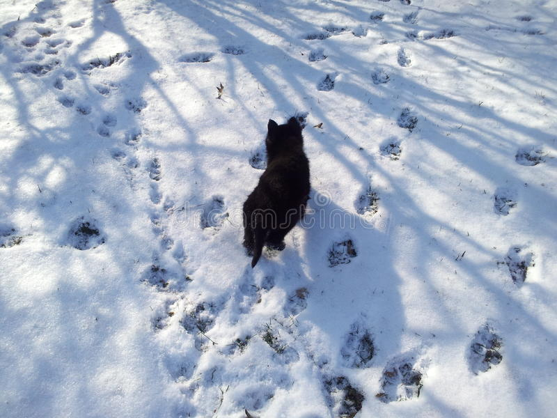 Baby Aria. Baby german shepard in the snow royalty free stock image