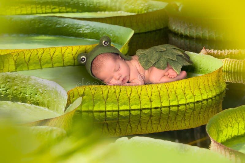 Baby auf einem Lotosblatt Victorias Regina stockfoto