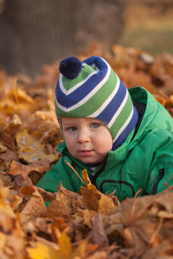 Baby in autumn leaves royalty free stock image