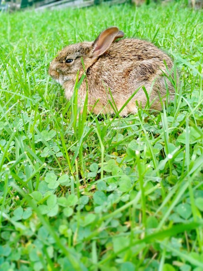 Baby babbit lizenzfreie stockbilder