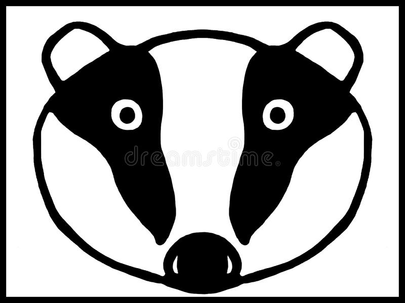 Baby badger head stock photography
