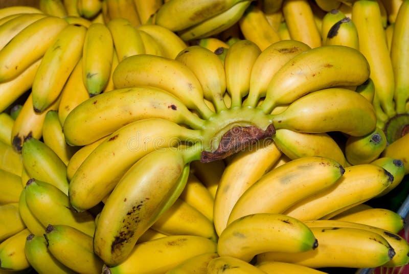 Baby bananas royalty free stock photo
