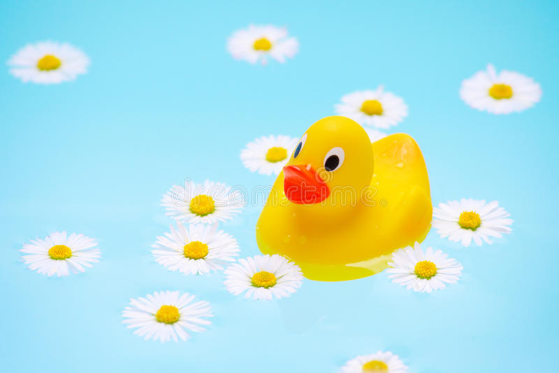 Baby bath with chamomile flowers and a duck stock photos