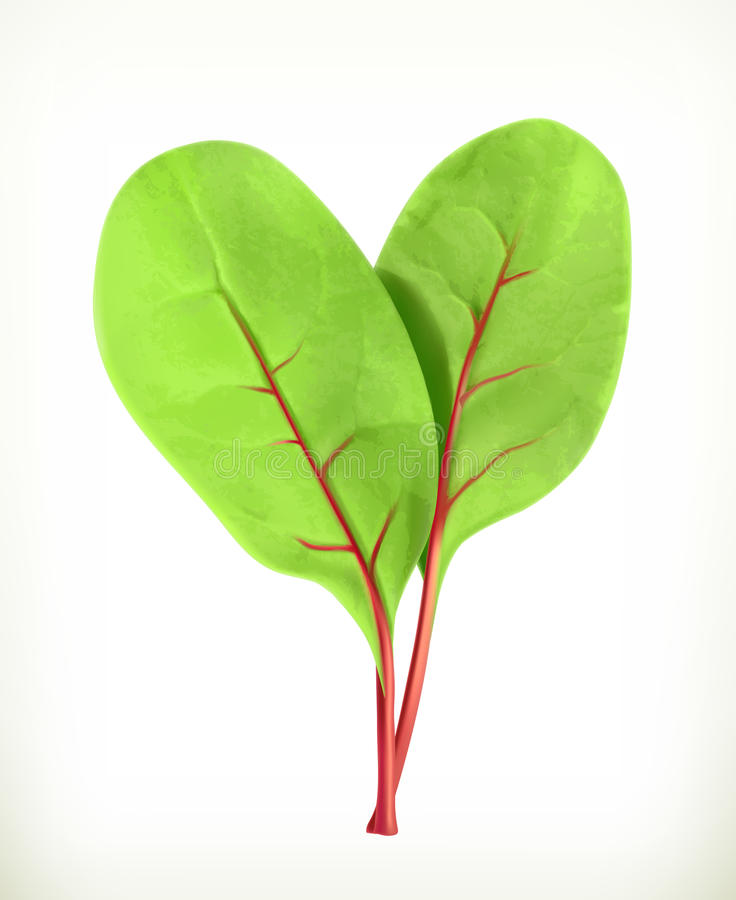 Baby beetroot leaves stock illustration
