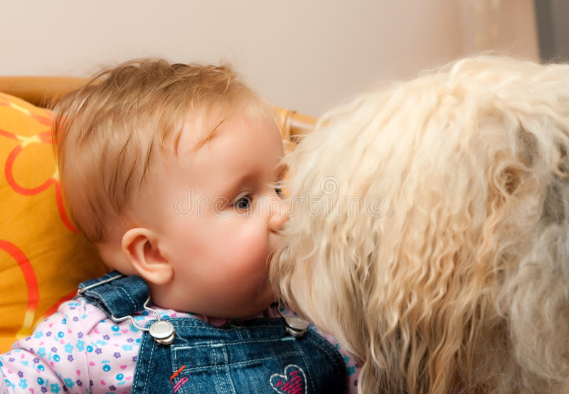 Baby with big dog stock photography